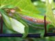 chameleon-garden-1386295-1279x851